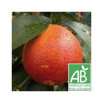 Orange Sanguine , au Kg