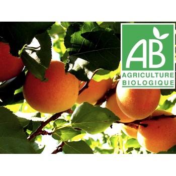 Abricot , au 500Gr