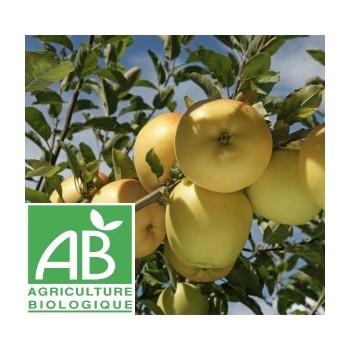 Pomme Belchard , au Kg
