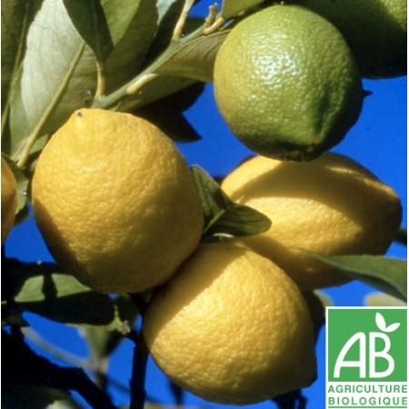 Citron Jaune , au 500 Gr