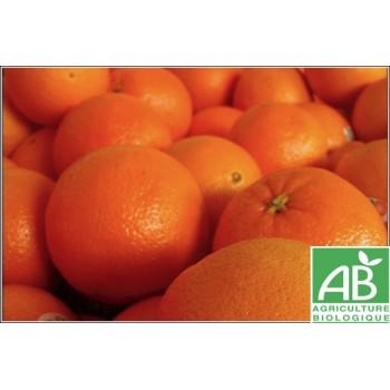 Orange , au Kg