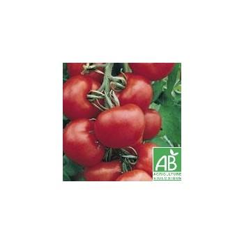 Tomate Ronde , au Kg